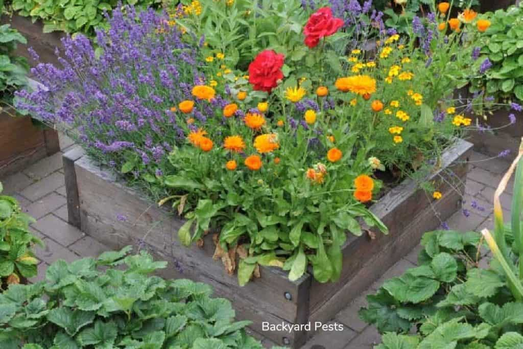 Do raised garden beds keep out animals - Blog