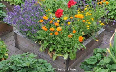 Do Raised Garden Beds Keep Animals Out?