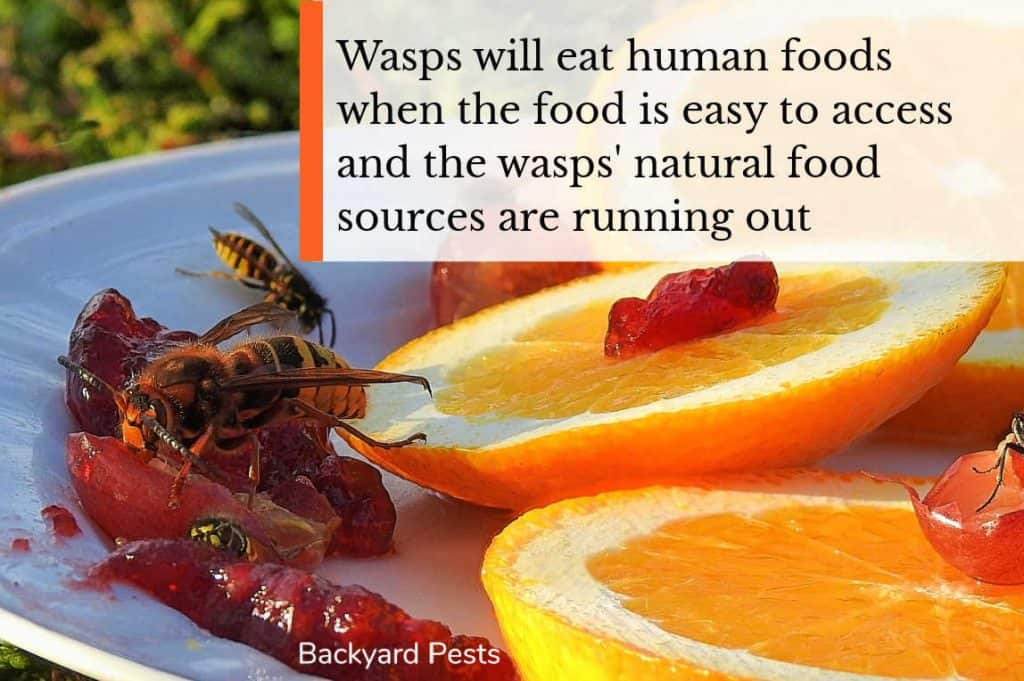 Photo of Wasps eat human foods and fruit