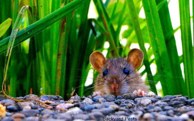 Can Mice Cause Structural Damage? What Can Happen When They Move In