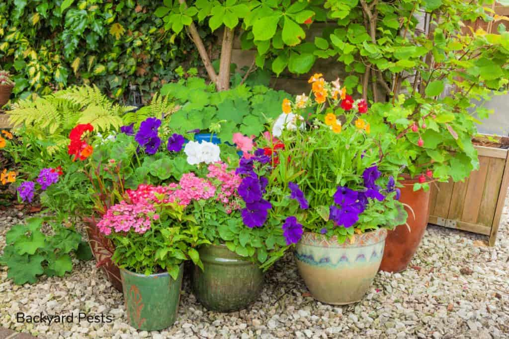 Photo of colorful plants in pots