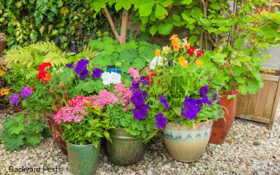 7 Ways To Stop Ants Nesting in Your Plant Pots And Why They Do It