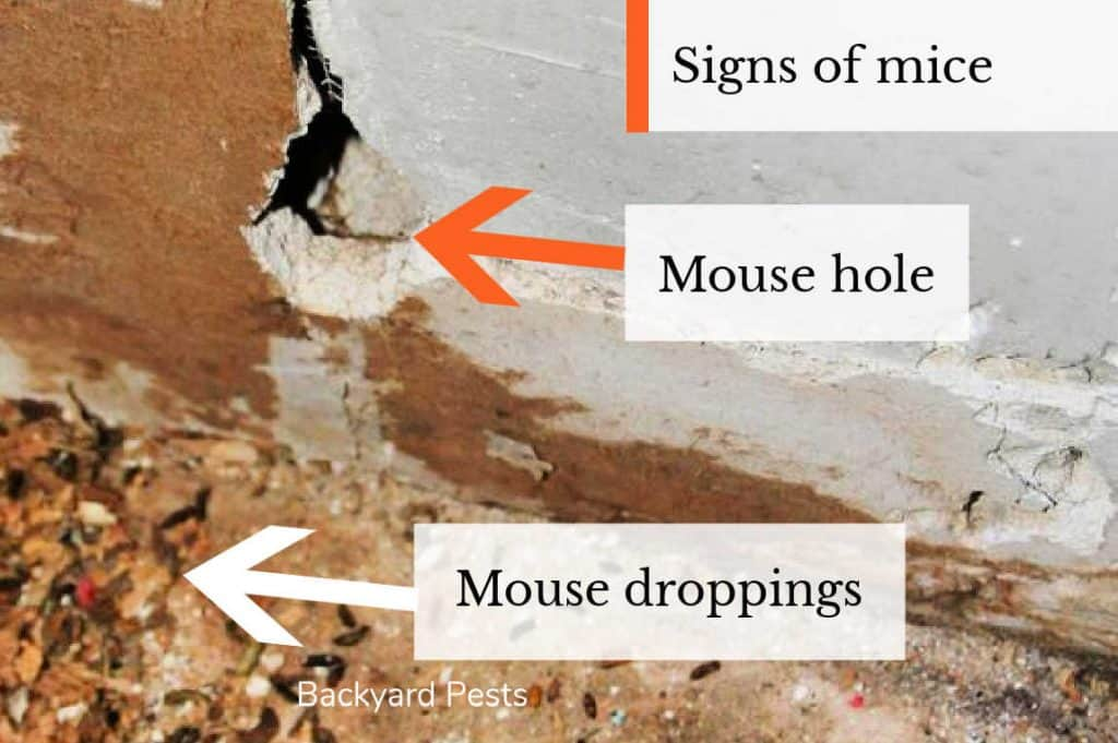 Photo of a mouse hole and mouse droppings