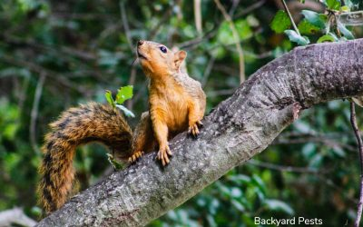 Squirrels Harming Your Trees? 3 Things Squirrels Do To Trees