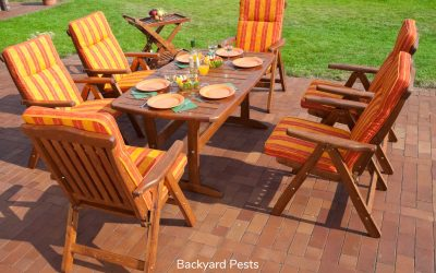 How To Treat Wood Furniture For Bugs
