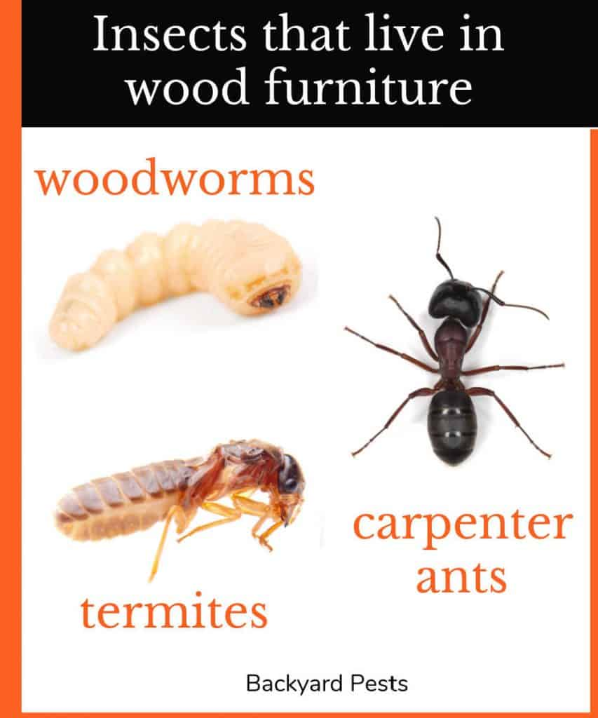 Infographic of insects that live in wood: woodworms, termites, and carpenter ants