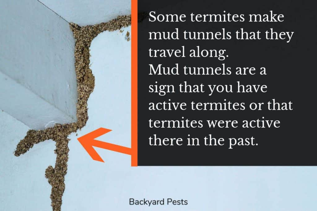 Photo of mud tunnels made by termites