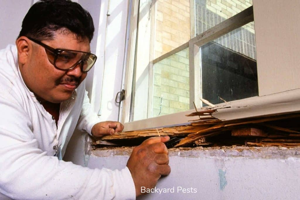 Photo of a man inspecting termite damage