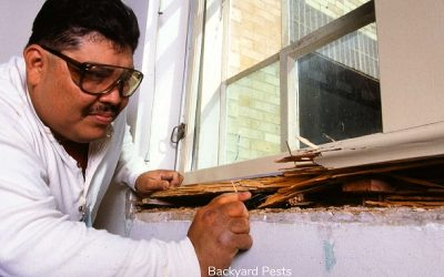 Wood Destroying Insects: What They Are, Signs of Damage, Inspections