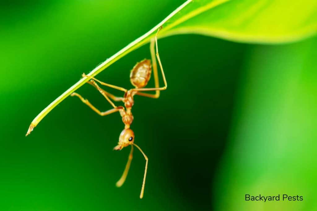 Do ants eat leaves - Blog