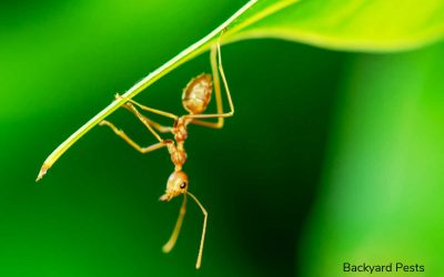 These Ants Destroy Leaves (And What To Do About Them)