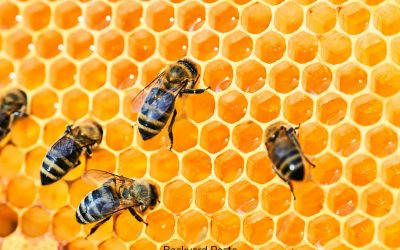 Find Out If Ground Bees Make Honey And Why (Or Why Not)