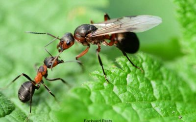 8 Easy Ways To Kill A Queen Ant In Your House Or Yard