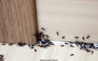 4 Reasons Why Ants Come Into Your House
