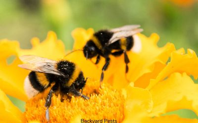 9 Reasons Why You Have Ground Bees In Your Yard