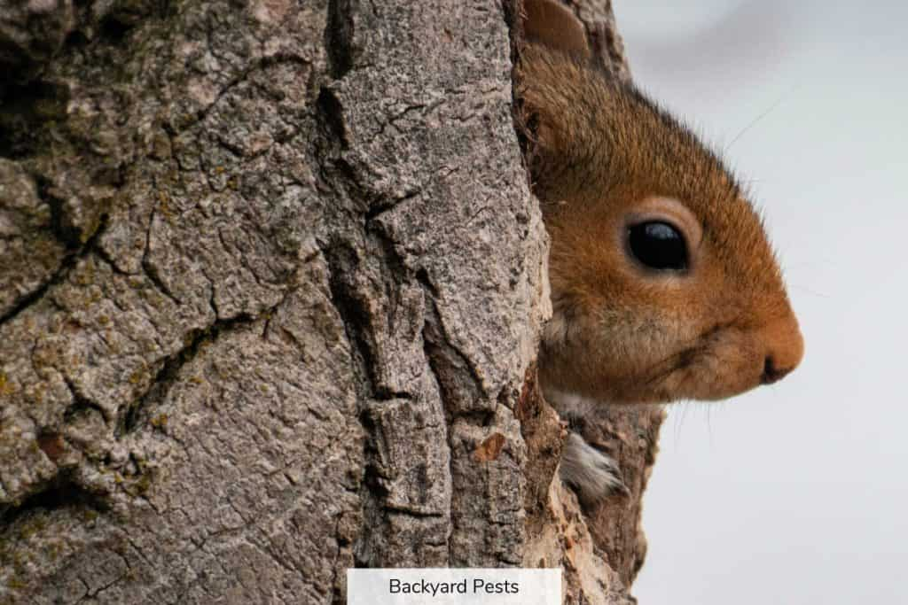 Photo of a rodent's face popping out of a tree hole - is it a rat or a squirrel?