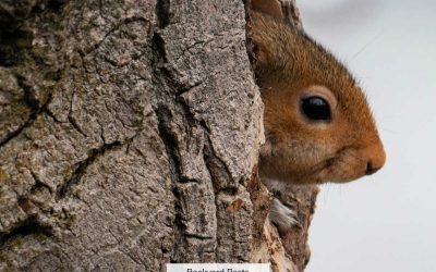 23 Easy Ways To Tell A Squirrel From A Rat (With Pictures And Videos)