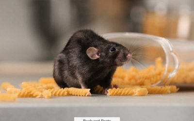 9 Easy Ways To Tell If You Have Rats In Your House (With Pictures And Videos)
