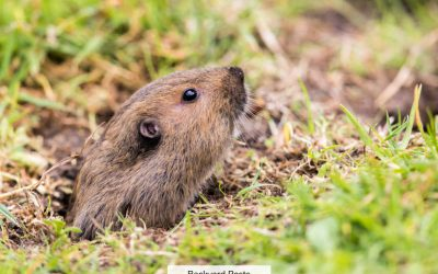 14 Animals That Eat Gophers And How To Scare Gophers Away