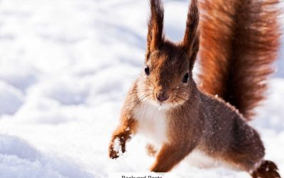 What Squirrels Do In Winter And How They Survive Cold Weather