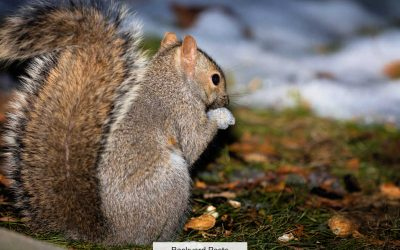 Why Squirrels Come Out At Night (And Which Ones To Look For)