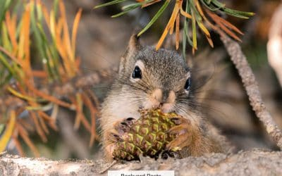 Why Squirrels Can't Stay Away From Pine Cones (And What To Do About It)